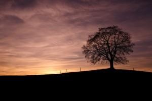 Fotografie samota stromu